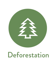 Environmental Reporting for Deforestation