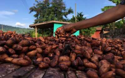 Ecometrica space tech set to help combat cocoa-fuelled deforestation