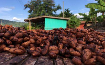 Ghana Chooses Ecometrica Platform For Cocoa Farming Deforestation Initiative