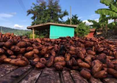 Ghana Chooses Ecometrica Platform For Cocoa Farming Deforestation Initiative