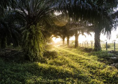 Satellites to help safeguard sustainability of palm oil, with launch of UK and Mexico project