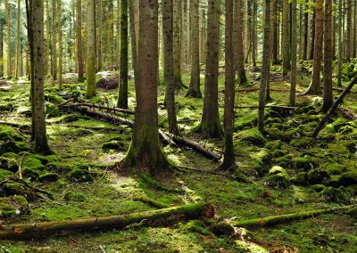 Are Carbon Accounting Rules for Biomass Energy Fit for Purpose?