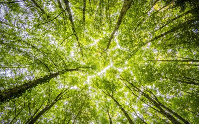 What's the difference between Carbon Neutral and Net Zero?